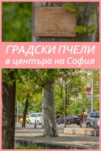 градски пчели в София