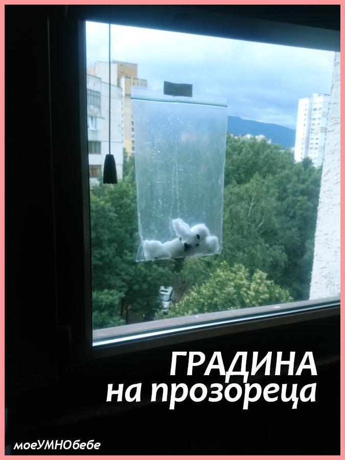 градина на прозореца