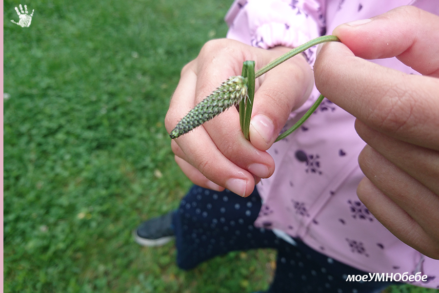 игри с треви